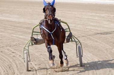 L'aloe vera pour les chevaux de courses