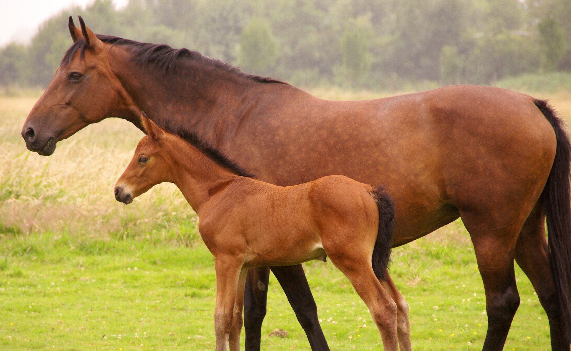 produits de soins et compléments pour chevaux de courses, elevage et entrainements