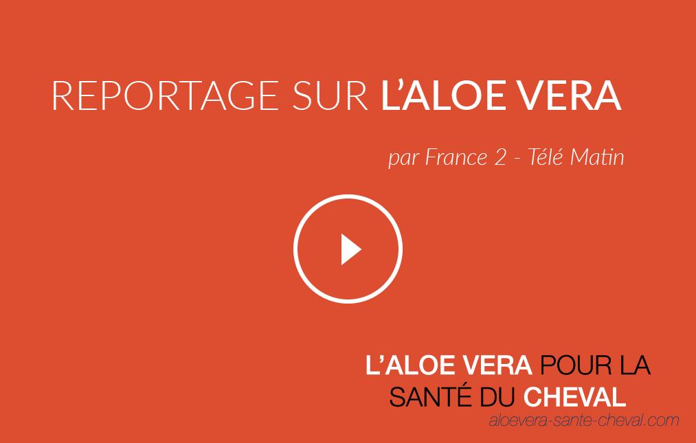 reportage-sur-l-aloe-vera-04