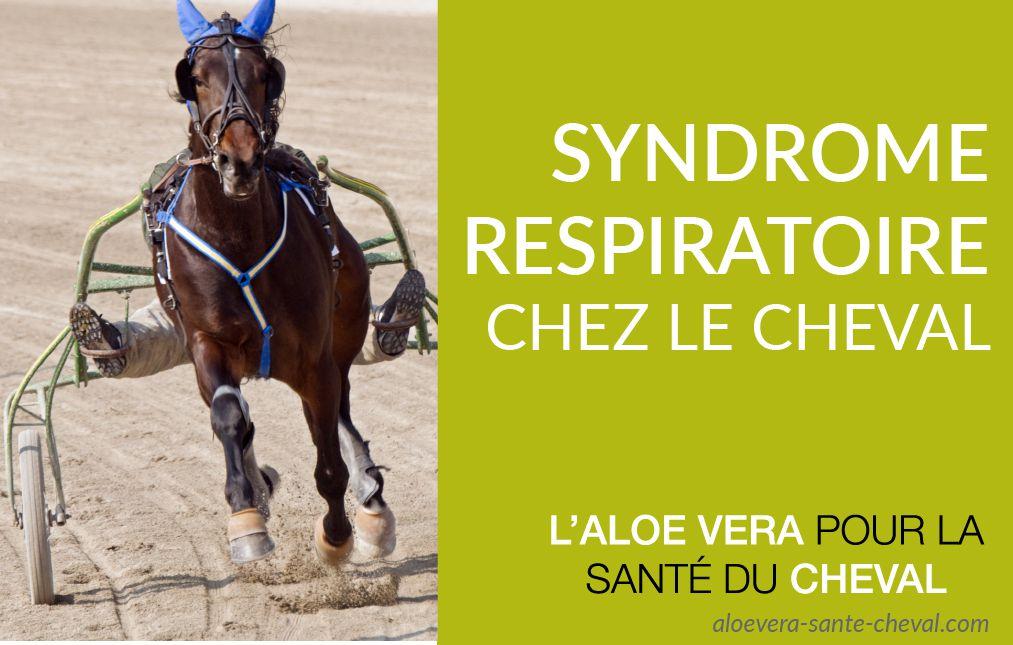 syndrome-respiratoire-chez-le-cheval-01